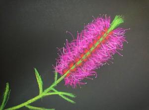 timur-bottlebrush